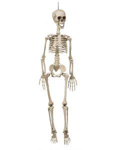Halloween Skelet 90 cm.