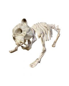Halloween hundeskelet